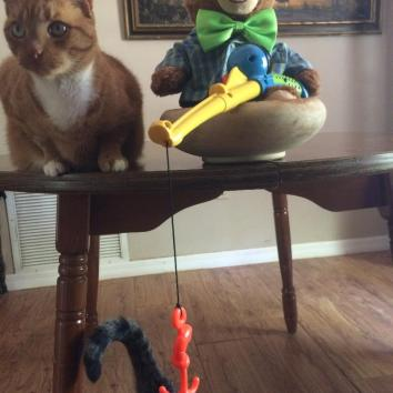 Sammy went cat fishing!